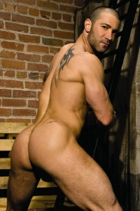 Junior Stellano Raging Stallion