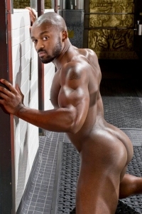 Derek Reynolds Raging Stallion